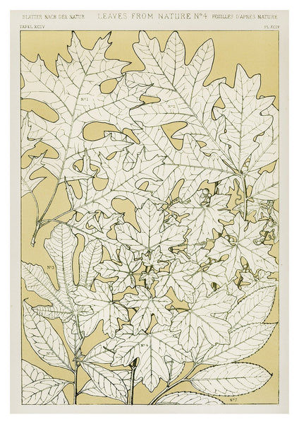 LEAVES FROM NATURE: Vintage Leaf Art Print