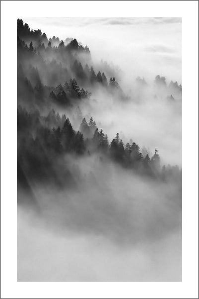 MISTY FOREST PRINT: Black and White Wall Art