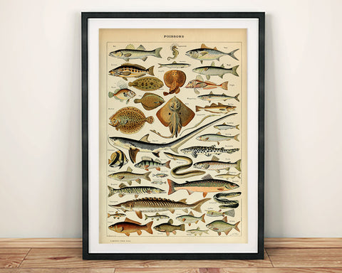 FISH POSTER: Vintage French Poissons Art Print
