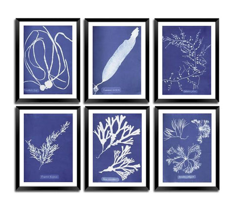 BOTANICAL ART PRINTS: Vintage Blue Algae Cyanotypes - Print Arcade USA