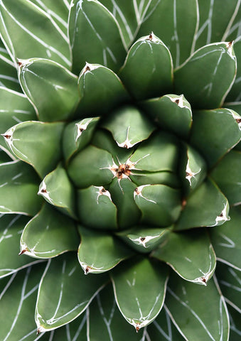 GREEN CACTUS PRINT: Close-up Photo Art