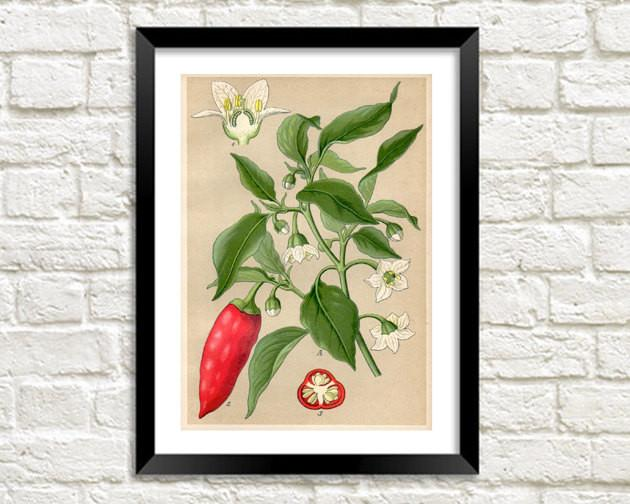 RED CHILI PRINT: Vintage Hot Pepper Plant Art - The Print Arcade