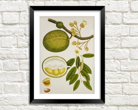 DURIAN FRUIT PRINT: Vintage Art Illustration Wall Hanging