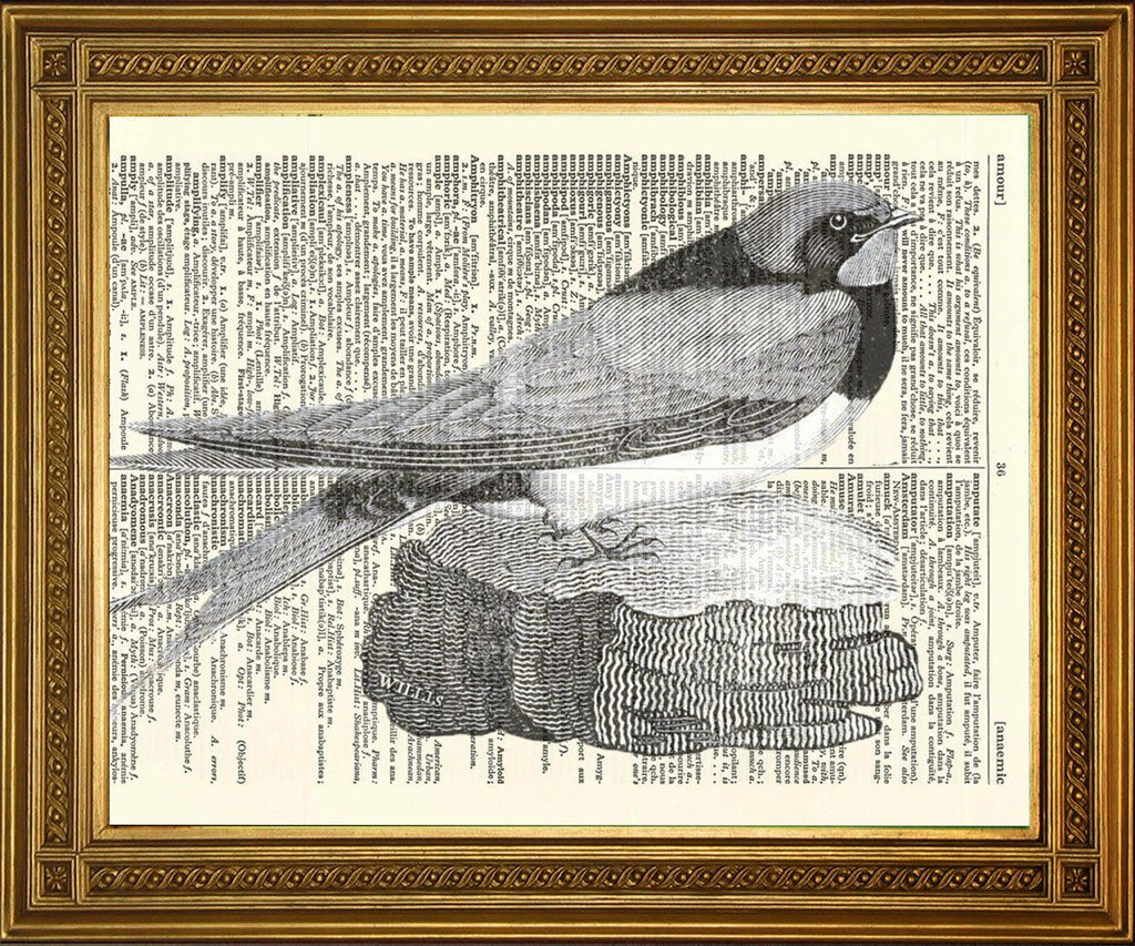 NESTING SWALLOW: Bird Dictionary Art Print - Print Arcade USA
