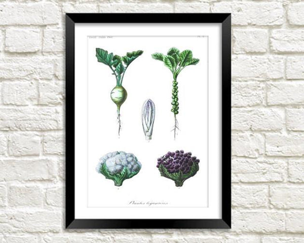 Blumenkohlendruck: Vintage Vegetable Art Illustration