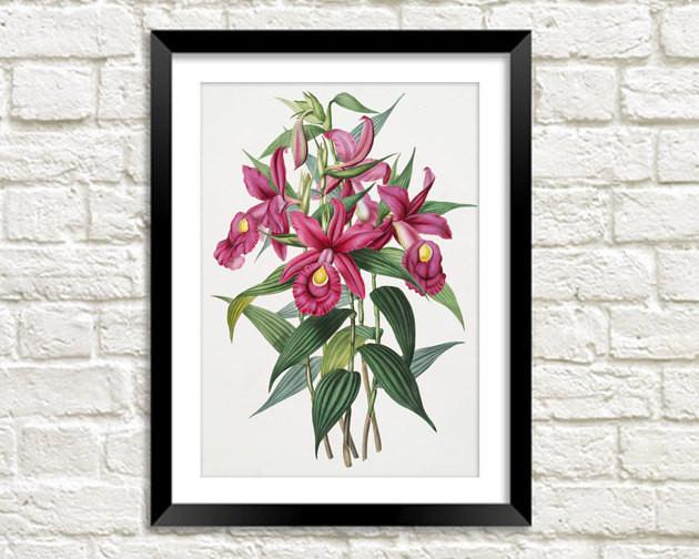 FUCHSIA FLOWER PRINT: Vintage Pink Art Illustration Wall Hanging