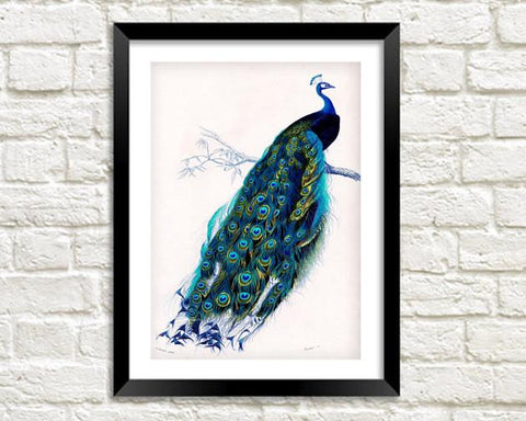 BLUE PEACOCK PRINT: Vintage Bird Art Illustration