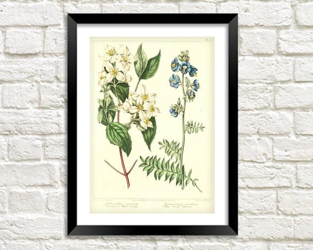 WHITE FLOWER PRINT: Vintage Floral Art Illustration - The Print Arcade