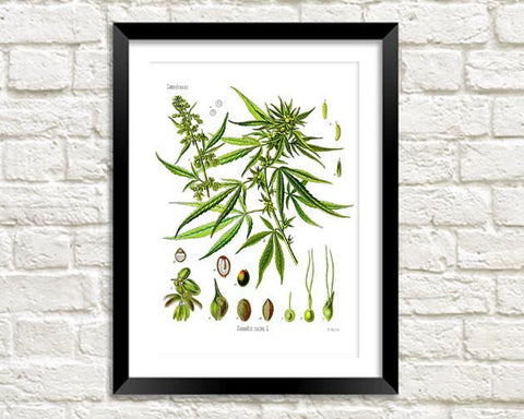 HEMP ART PRINT: Vintage Cannabis Plant Illustration