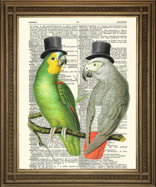 PAPAGEI DRUCKEN: Dictionary Art Bird Illustration - Drucken Arcade USA