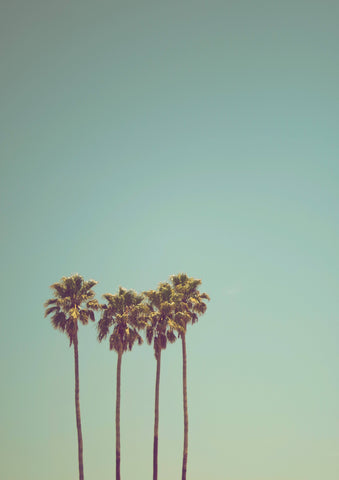 PALM TREES: Photography Print