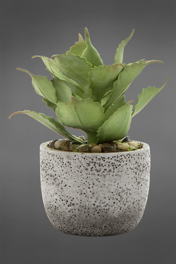 Agave - Green - 23cm Tall Artificial Plant In Concrete Pot