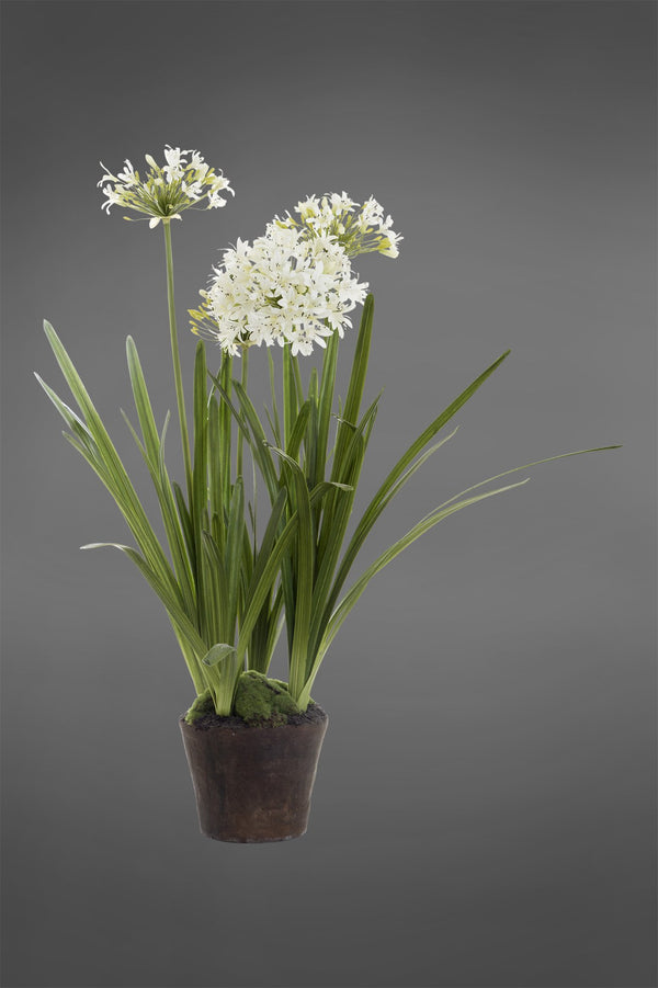 Agapanthus - White - 110cm Tall Artificial Plant in Paper Pot