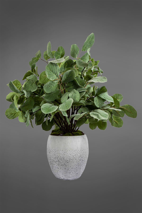 Ficus Greenery - Green - 110cm Tall Artificial Plant In Small Grey Pot