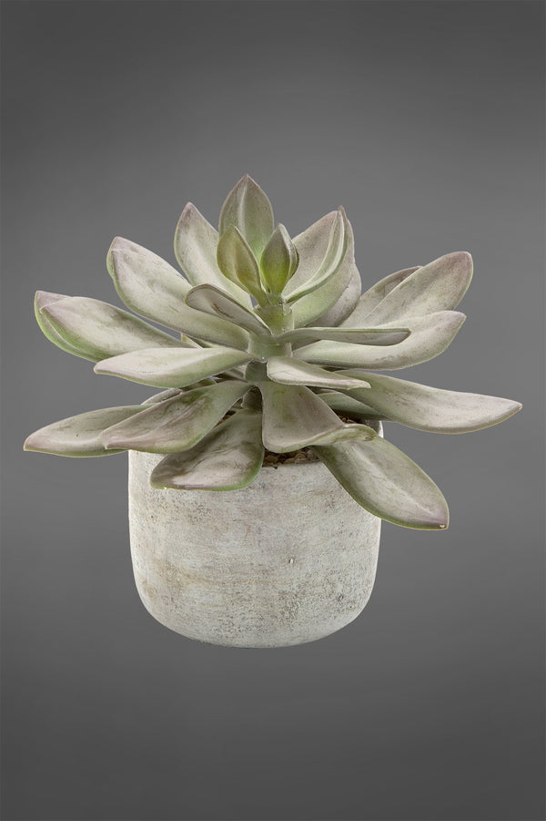 Echeveria Desert Succulent - Green - 20cm Tall Artificial Plant in Grey Concrete Pot