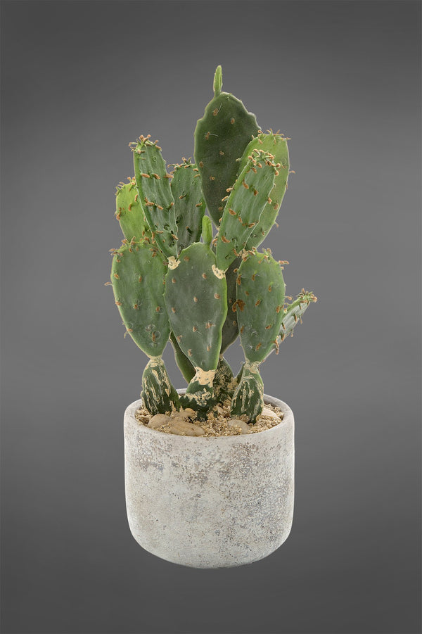 Prickly Pear Desert Cactus - Green - 32cm Tall Artificial Plant in Concrete Pot