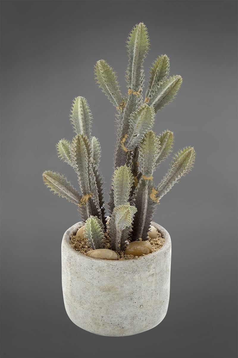 Euphorbia Spikey Cactus - Green - 32cm Tall Artificial Plant in Concrete Pot