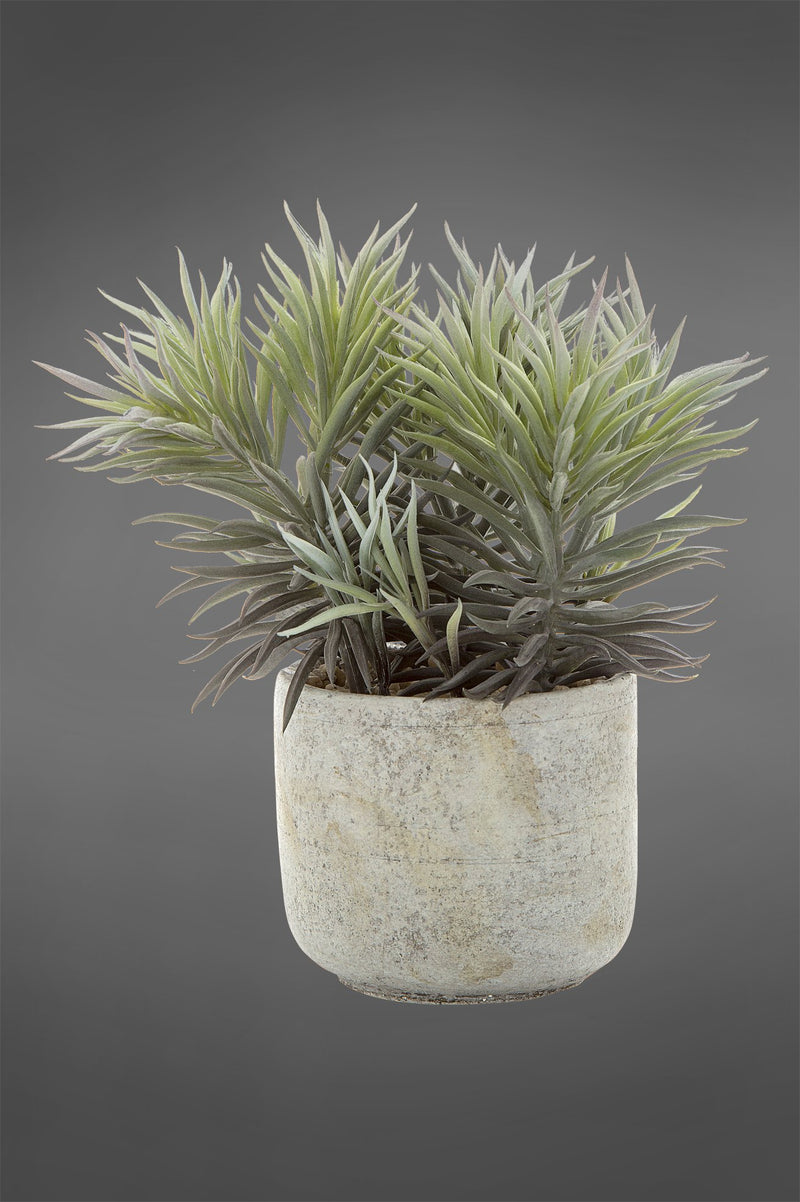 Needle Succulent - Green - 23cm Tall Artificial Plant in Concrete Pot