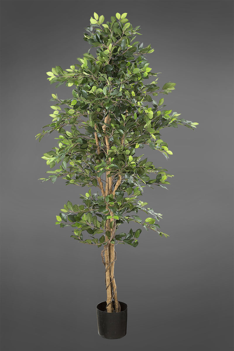 Ficus Retusa Bush - Green - 1.8m Tall Artificial Tree