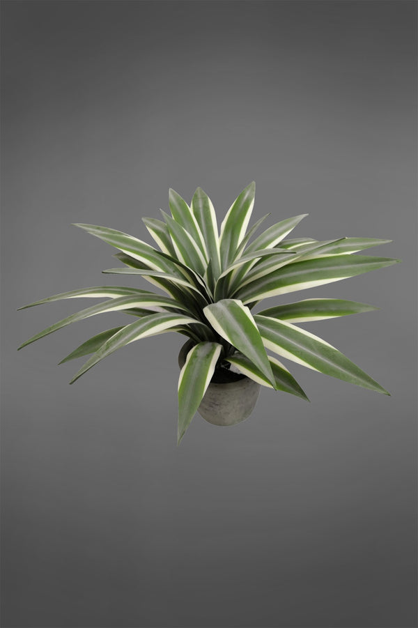 Flax Leaf - Green - 35cm Tall Artificial Plant in Pot