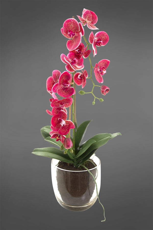 Phalaenopsis - Fuchsia - 80cm Tall Artificial Orchid in Glass Vase