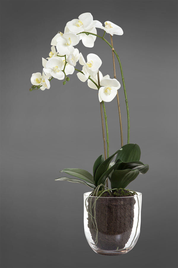 Phalaenopsis - White - 85cm Tall Artificial Orchid in Glass Vase
