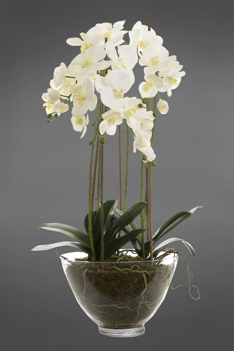 Phalaenopsis - White - 85cm Tall Artificial Orchid in Large Glass Bowl