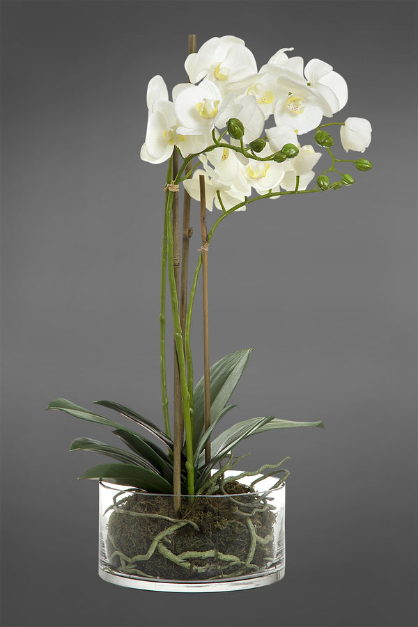 Phalaenopsis - White - 60cm Tall Artificial Orchid in Round Glass Vase