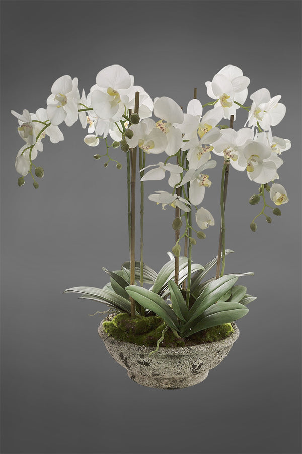 Phalaenopsis - White - 65cm Tall Artificial Orchid in White Pot