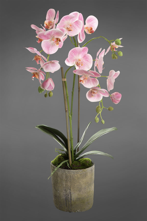 Phalaenopsis - Pink - 65cm Tall Artificial Orchid in Terracotta Pot