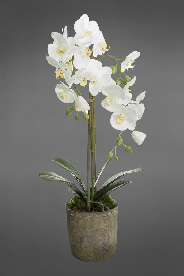 Phalaenopsis - White - 65cm Tall Artificial Orchid in Terracotta Pot
