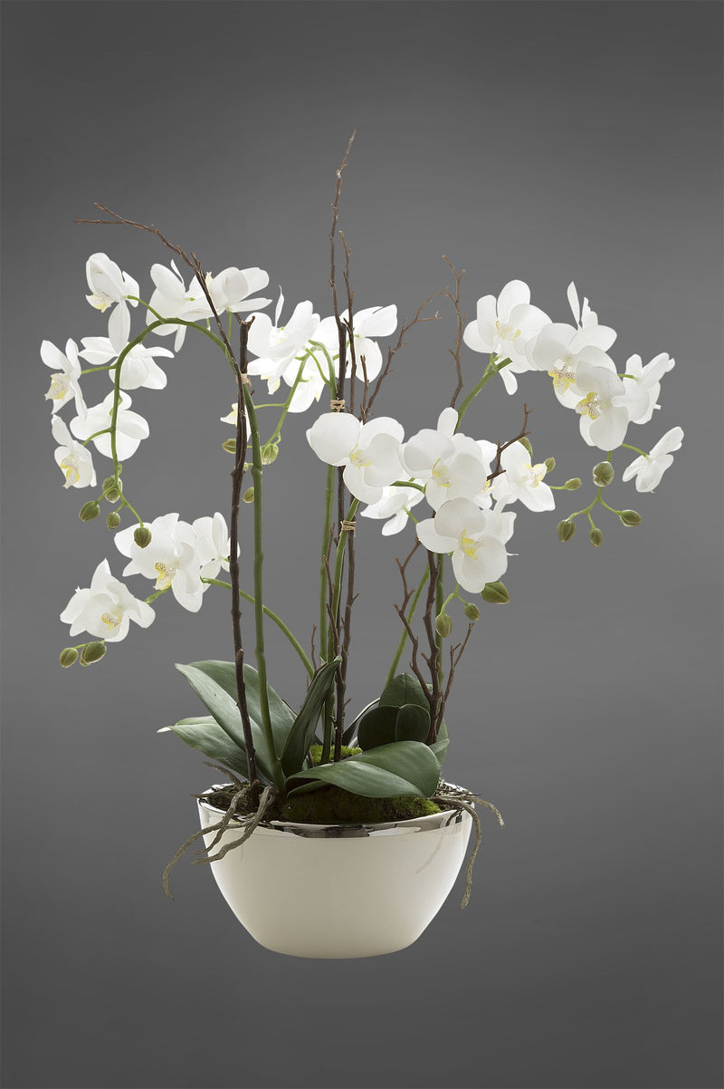 Phalaenopsis - White - 60cm Tall Realistic Artificial Orchid in Pot with Silver Rim