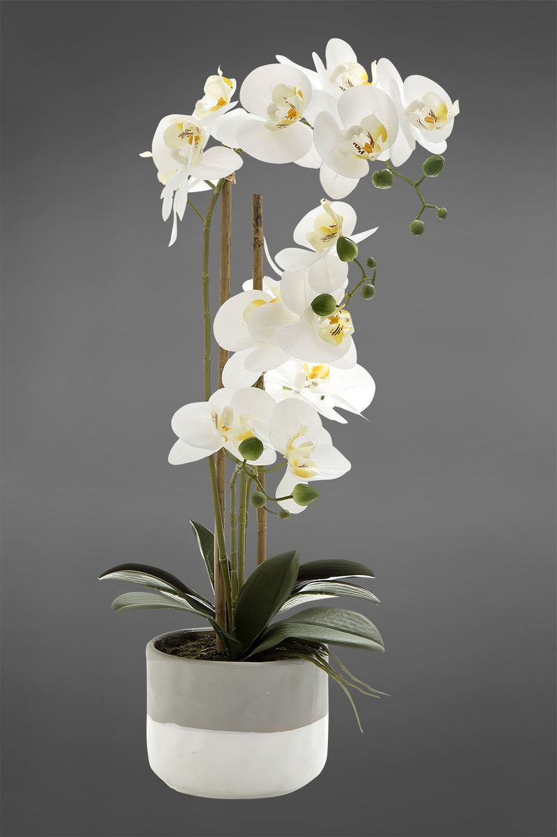 Phalaenopsis - White - 55cm Tall Artificial Orchid in Grey Pot