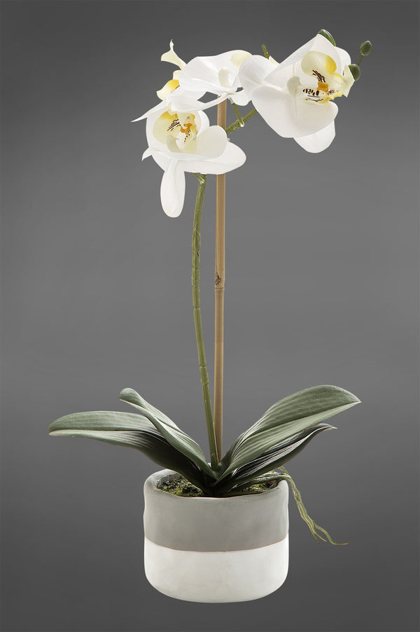 Phalaenopsis - White - 40 cm Tall Artificial Orchid in Grey Pot