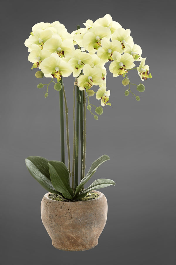 Phalaenopsis - Light Green - 45cm Tall Artificial Orchid in Terracotta Pot