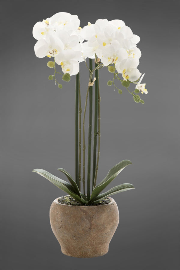 Phalaenopsis - White - 45cm Tall Artificial Orchid in Terracotta Pot