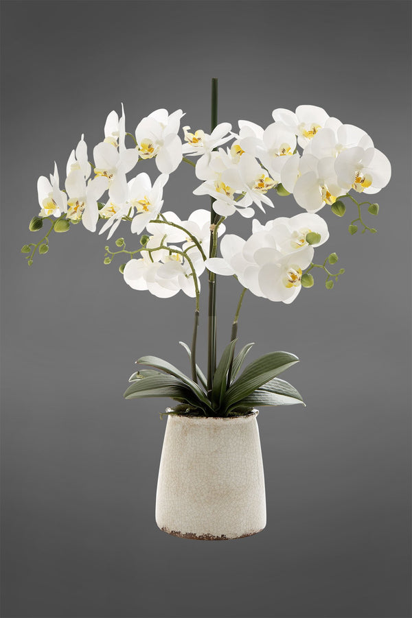Phalaenopsis - White - 60cm Tall Artificial Orchid in Ivory Pot