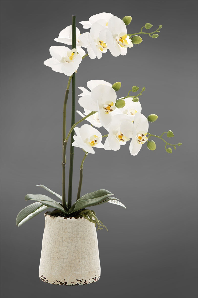 Phalaenopsis - White - 50cm Tall Artificial Orchid in Ivory Pot