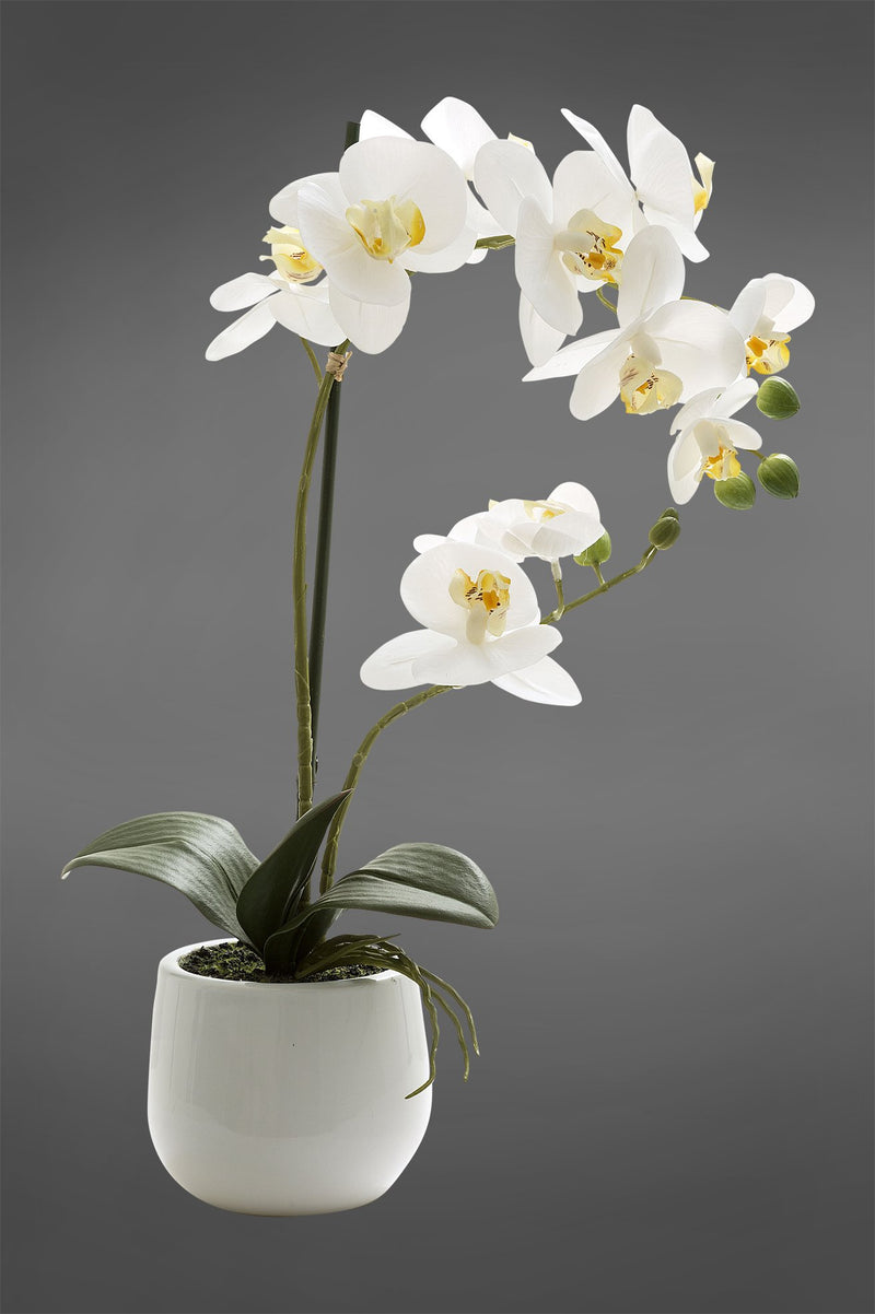 Phalaenopsis - White - 45cm Tall Realistic Artificial Orchid in Glossy White Pot