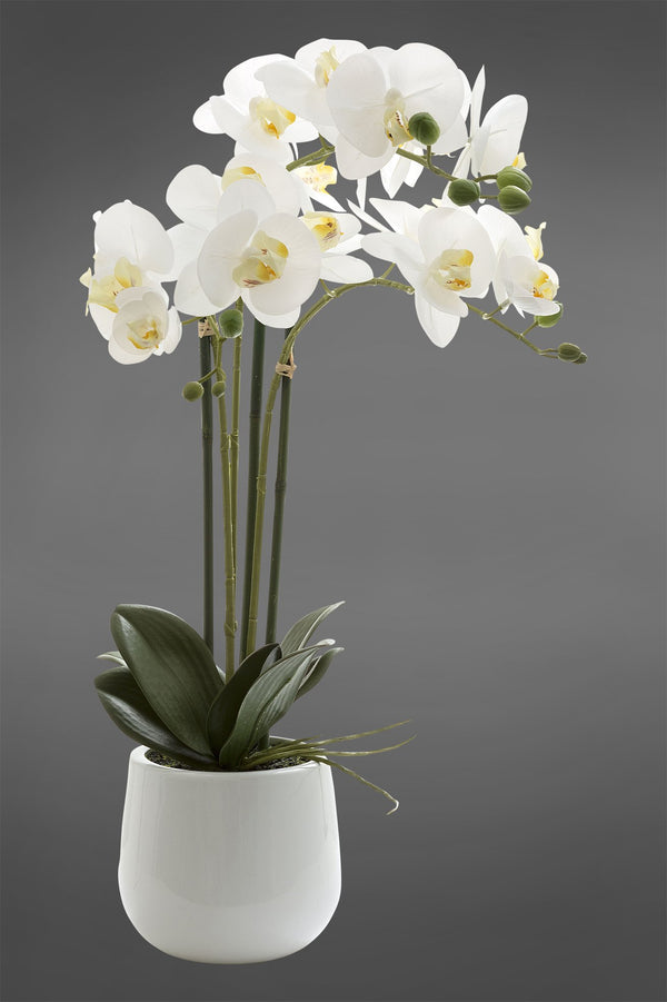 Phalaenopsis - White - 60cm Tall Realistic Artificial Orchid in Glossy White Pot