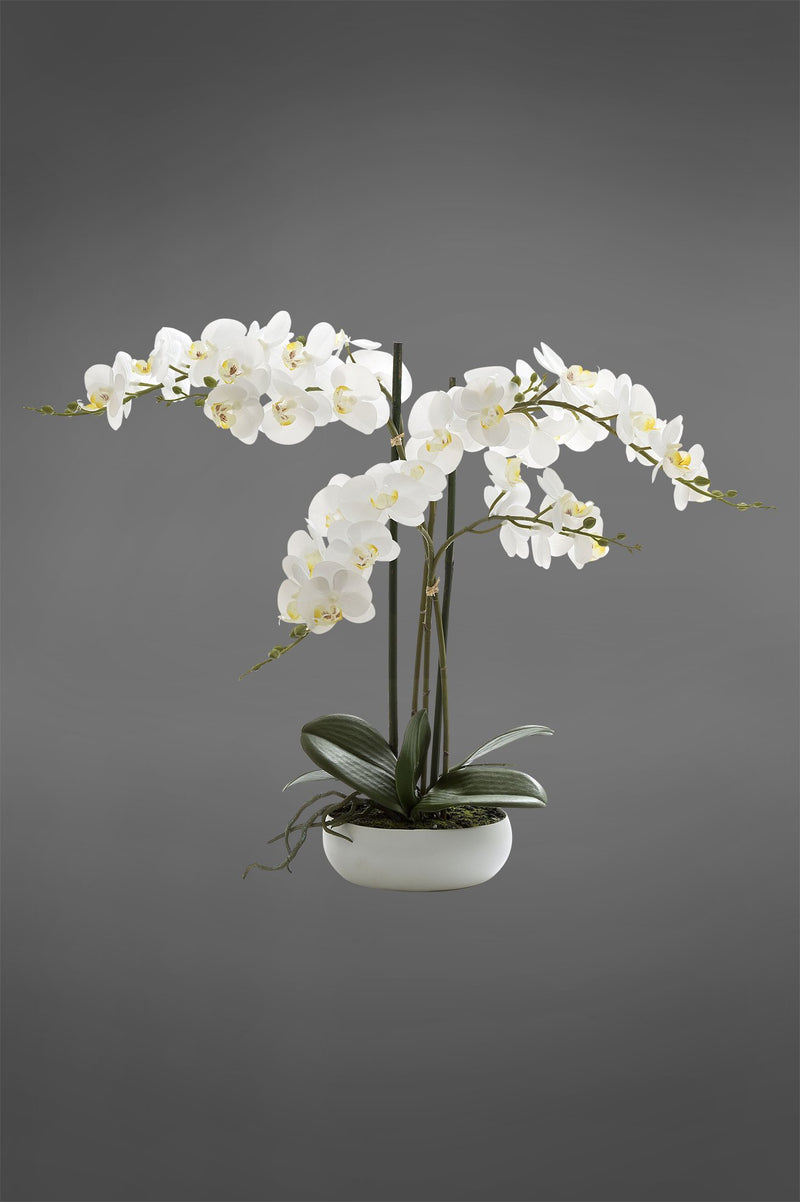 Phalaenopsis - White - 45cm Tall Realistic Artificial Orchid in White Shallow Pot