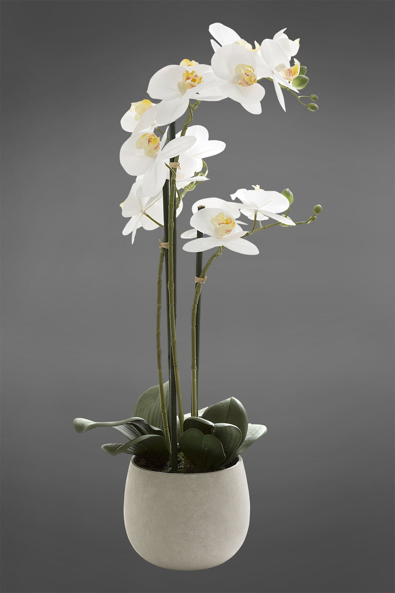 Phalaenopsis - White - 70cm Tall Realistic Artificial Orchid in Ivory Clay Pot
