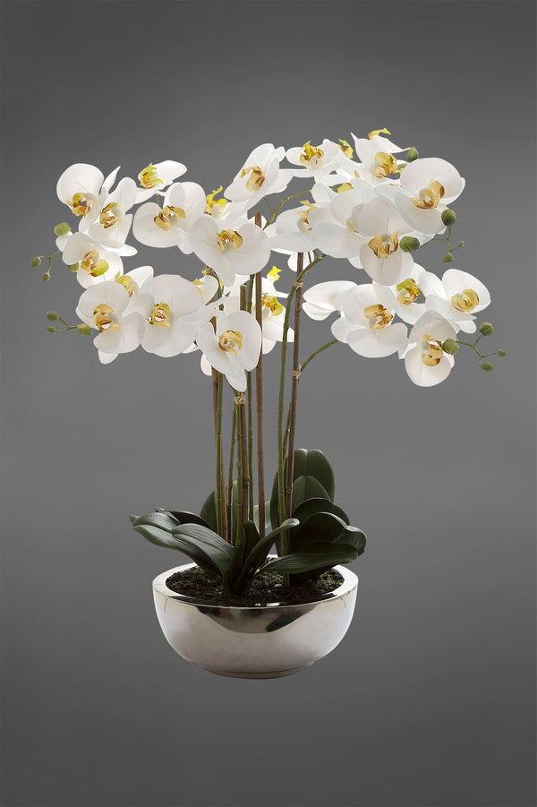 Phalaenopsis - White - 65cm Tall Realistic Artificial Orchid in Silver Pot