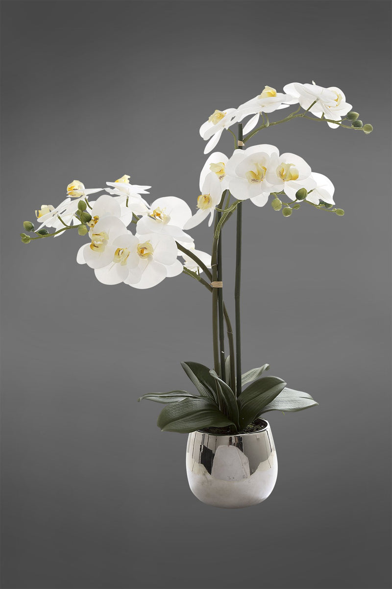 Phalaenopsis - White - 67cm Tall Realistic Artificial Orchid in Silver Pot