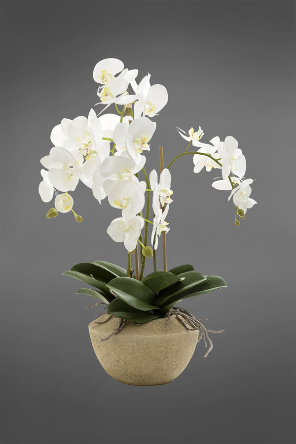 Phalaenopsis - White - 65cm Tall Artificial Orchid in Stone Pot
