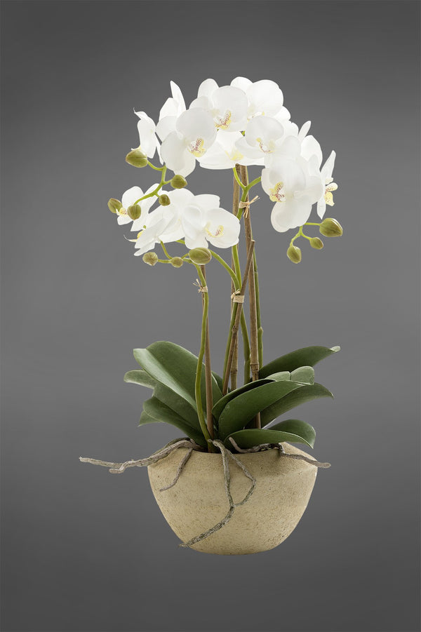 Phalaenopsis - White - 50cm Tall Artificial Orchid in Stone Pot