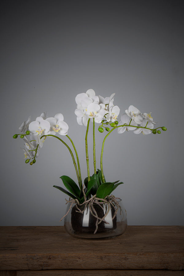 Phalaenopsis - White - 45cm Tall Artificial Orchid in Glass Vase