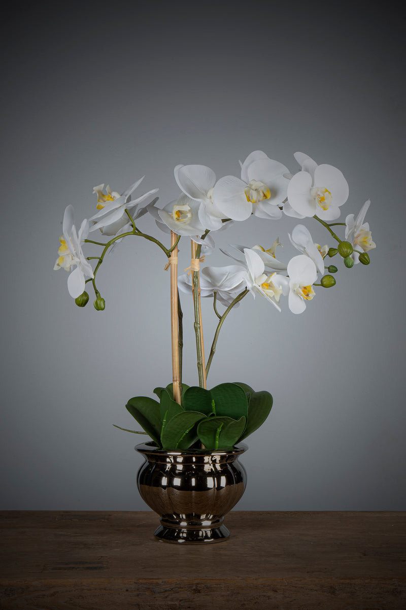 Phalaenopsis - White - 60cm Tall Artificial Orchid in Silver Ribbed Bowl