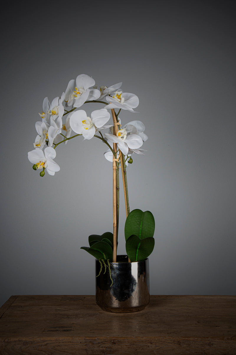 Phalaenopsis - White - 66cm Tall Artificial Orchid in Modern Silver Pot