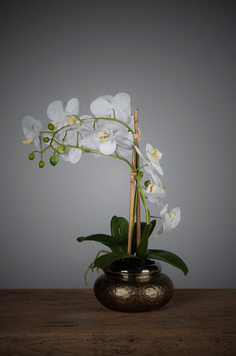 Phalaenopsis - White - 53cm Tall Artificial Orchid in Antique Brass Bowl